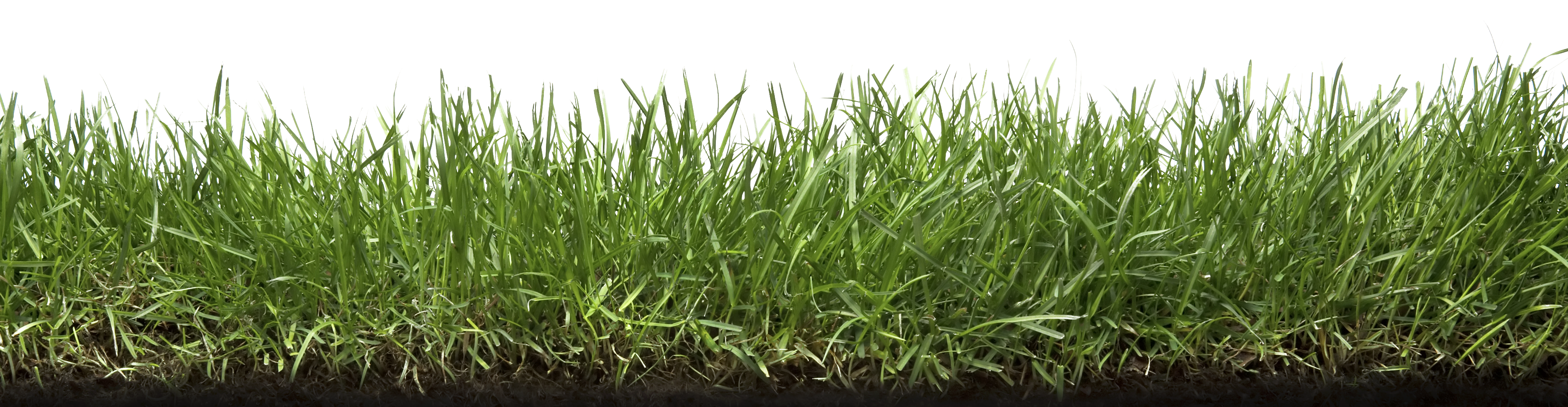 grass with roots